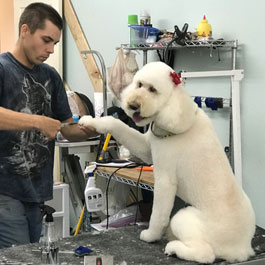 Dog Getting Groomed
